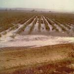 Desarrollo de las primeras siembras de CATSA en polvazales