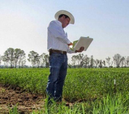 agricola-investigacion