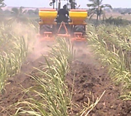 agricola-cilo-planta
