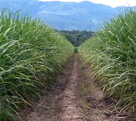 agricola-generalidades