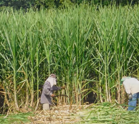 agricola-siembra