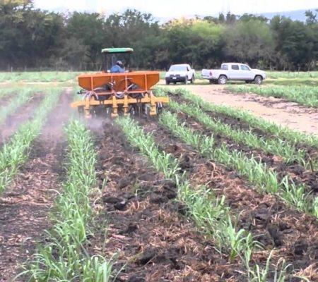 agricola-soca