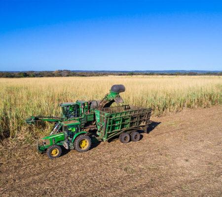 agricola01